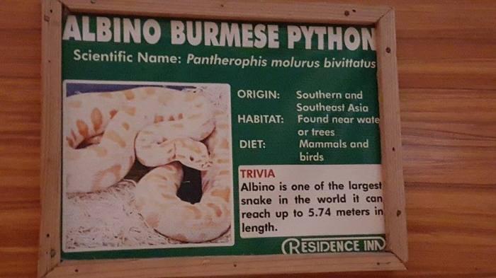 animals-python2