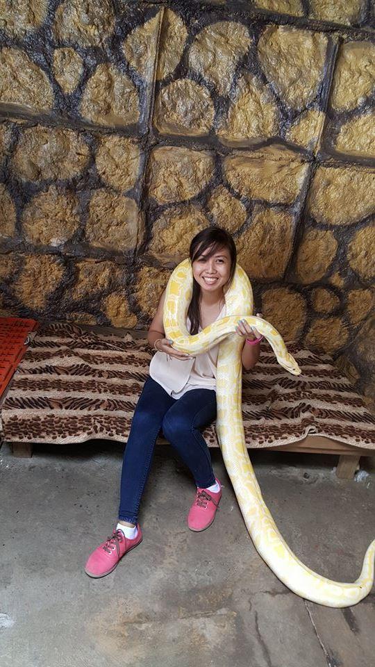 animals-python3